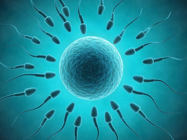 口服藥Finasteride對精子及荷爾蒙指數的影響